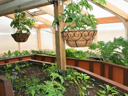 greenhouse500x333