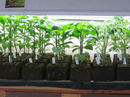 seedlings1024